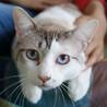 容姿端麗おっとり猫★ポワロ君 サムネイル3