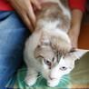容姿端麗おっとり猫★ポワロ君 サムネイル5