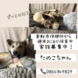 「倉敷っ子たのこちゃんお泊り保育最終日→譲渡決定!」サムネイル2
