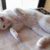 みなと1号★甘えん坊&食いしん坊な白子猫♂ サムネイル3