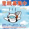 【完全予約制】保護猫の面談会@開成