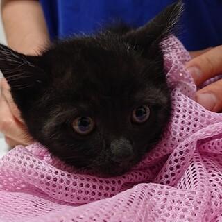 ⭐お顔の可愛い黒猫くん里親様募集開始です⭐