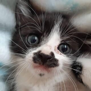 生後2ヶ月ぐらい可愛い子猫の里親募集