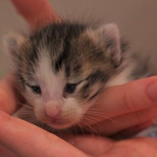 壁から生まれた子猫♀