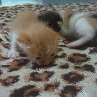 5月18に産まれた8匹の子猫です