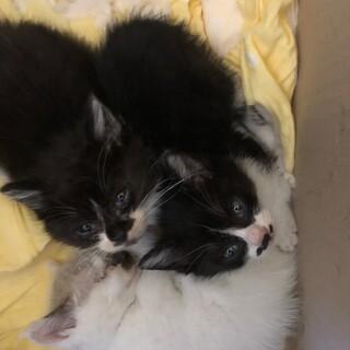 猫ちゃん3匹(白い子交渉中です)