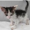 お目目クリクリの可愛い子猫。収容期限6/2朝迄