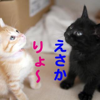 ■りょ〜♀&えさか♂■6月6日7日お見合い予定■