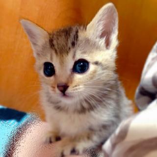 大きな瞳が超可愛いチュンちゃん