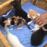 子猫の里親を募集します。(5匹、内定しました。)