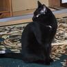 大人しい黒猫の女の子です