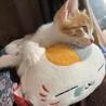 祝 猫のいる生活
