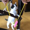 春日市より:背中のハートが可愛い白黒子猫 サムネイル7