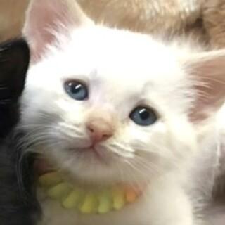 可愛い子猫です♪