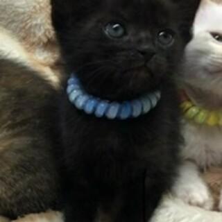 お目々ぱっちりの黒猫ちゃん♪