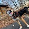 【ペイン】笑顔の可愛いビーグル風な女の子♡ サムネイル2