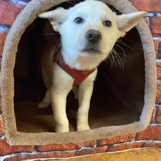 白くてかわいい仔犬の【アスメロード】くん☆彡