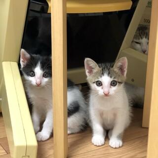 生後2ヶ月の可愛い3兄弟