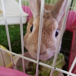 「先住にウサギがいますがチンチラかモルモットを欲しい」サムネイル2