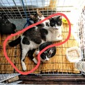 母猫1匹+仔猫3匹