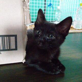 黒、ソラちゃん 3か月 メス