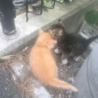 捨て猫です