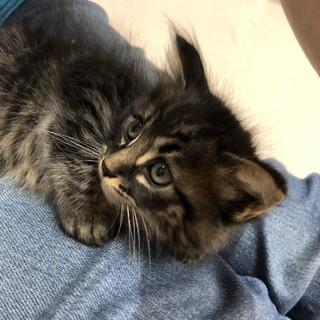 野良猫の子。可愛い濃いめのキジトラくん。