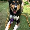 1歳の中型犬雑種 お散歩が大好きな男の子! サムネイル2