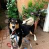1歳の中型犬雑種 お散歩が大好きな男の子! サムネイル3
