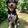 1歳の中型犬雑種 お散歩が大好きな男の子! サムネイル4