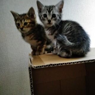 子猫ちゃん5匹保護しました