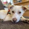 オテンバで、ひとが大好きな子犬【マーズ】ちゃん♬ サムネイル2