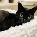 黒猫甘ったれ❤︎全抜歯のルーちゃん