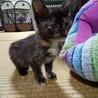 美サビ警察遺棄子猫