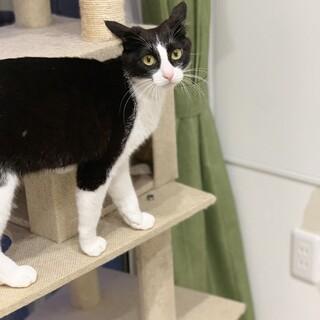 黒白猫ちゃん♬︎