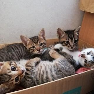4兄弟の子猫