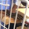1歳4ヶ月のシマリス2匹♂♀ペア