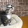 愛護センター出身のイケメン美猫レオ参上