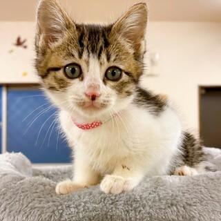 【動画】ふんわり優しい子猫ちゃん・女の子♀