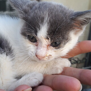 生後1ヶ月位の猫ちゃんです。