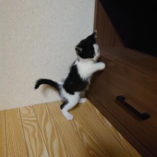 生後1ヶ月半の子猫