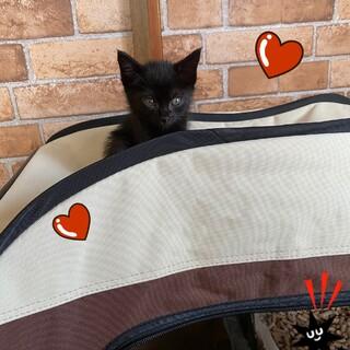 ひとりぼっちの黒子猫ちゃん