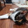 お母さん大好き!仲良しな三毛猫の親子 サムネイル2