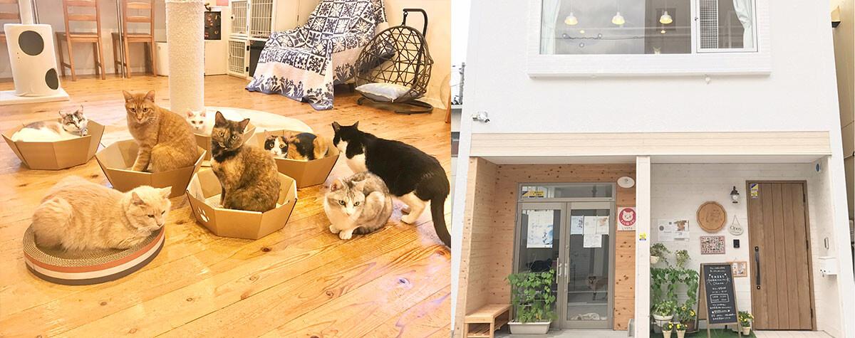 里親募集型保護猫ふれあいサロンOhana サムネイル1