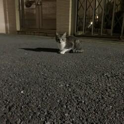 川崎市高津区。子猫の保護についての相談です。