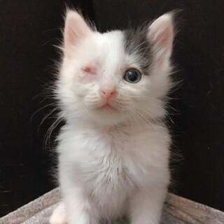 生後約2ヶ月モフモフの甘えん坊な男の子