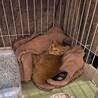 茶トラ子猫さん サムネイル2