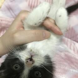 保護した猫が難病でした