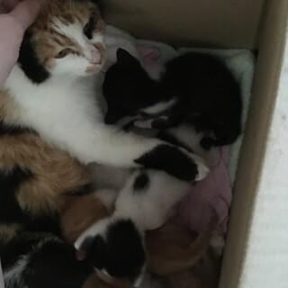 子猫の里親を募集しています