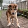ウインク犬☆キタローくん サムネイル5